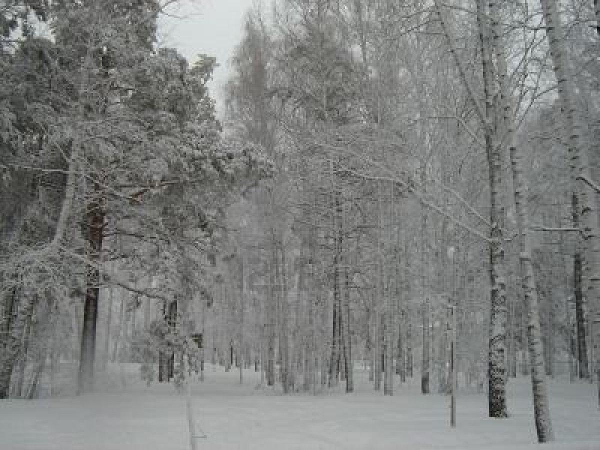 Foreste siberiane