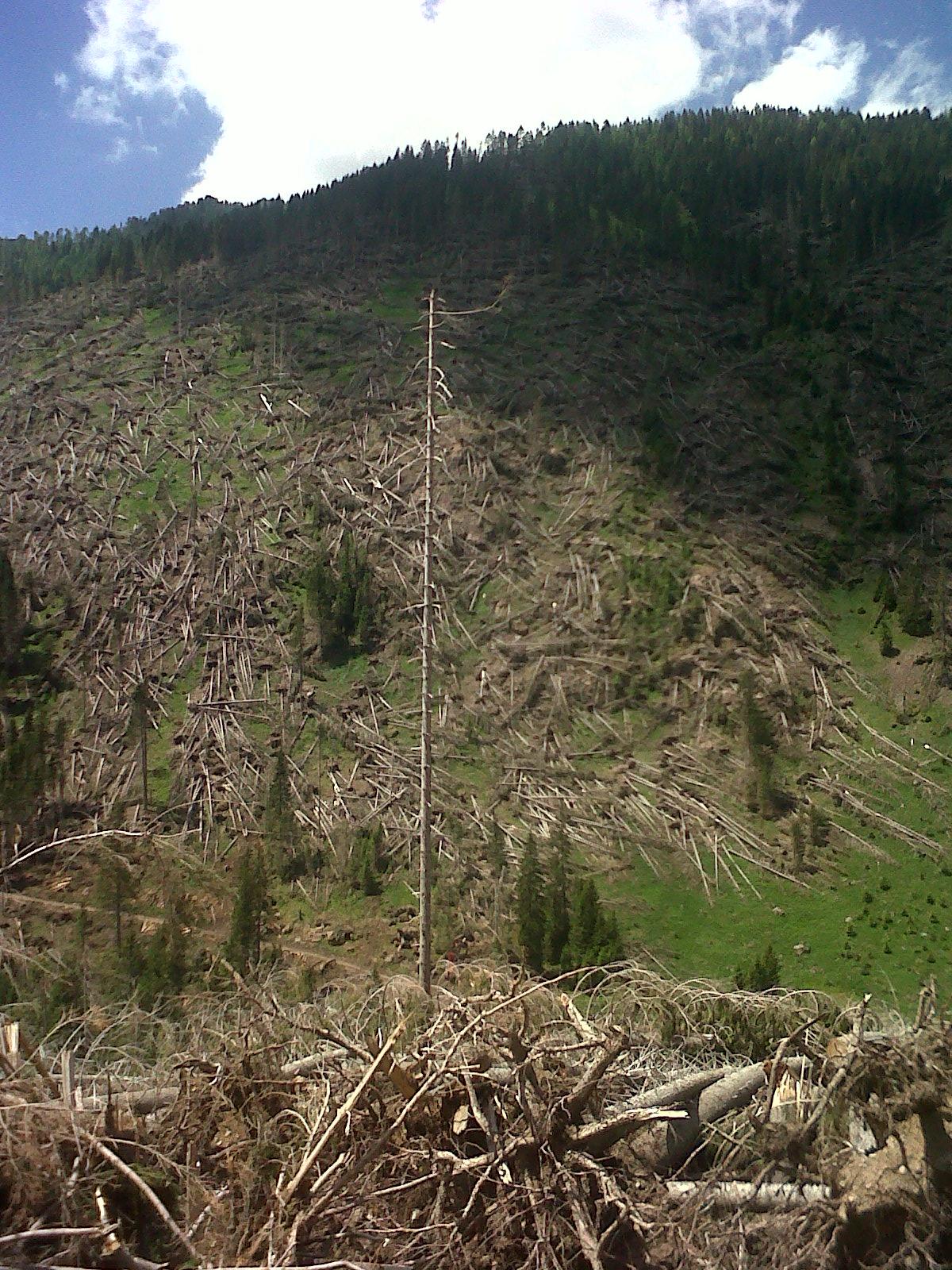 Le conseguenze di Vaia in Trentino (Val Cadino)