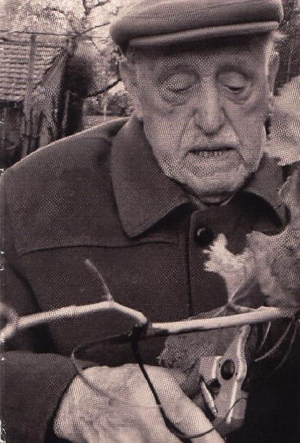 Ferdinando (Mario) Tonon