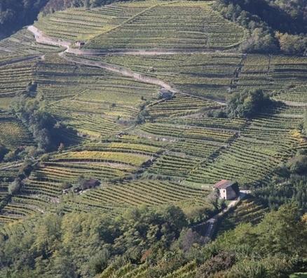 Vigneti del Trentino