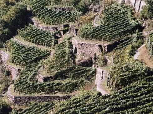 Terrazzamenti in Valtellina
